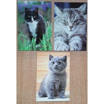 Zestaw pocztówek - koty, 3 szt