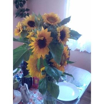 Kwiaty słonecznika do bukietów