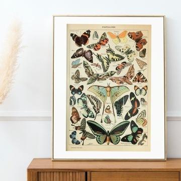 Plakat zbór Motyli rysowanych vintage