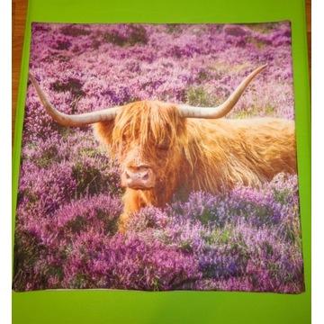 Poszewka na poduszkę krowa bydło szkockie Highland