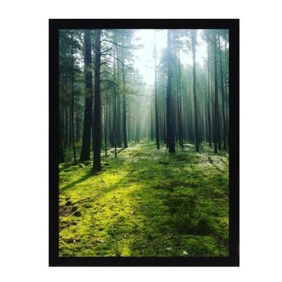 Dekoria Obraz Green Forest 30x40cm