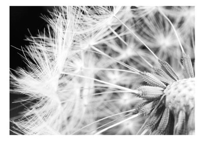Nástenné maľby 3d optické púpava kvety 200x140