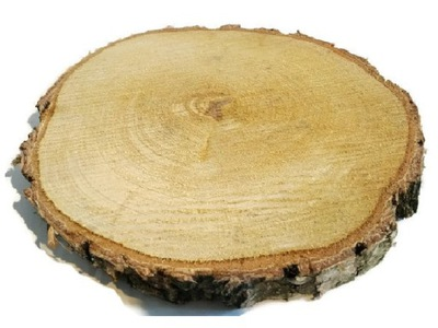 сухие пластыри древесины, диски Береза 23 -27 см