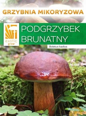 БУРЫЙ польский гриб Грибы лесные, МИЦЕЛИЙ микориза