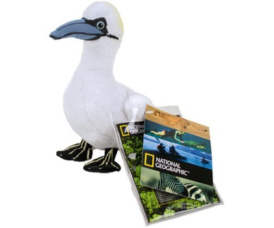 NATIONAL GEOGRAPHIC 14 cm  JAN VAN GENT  (GANNET)