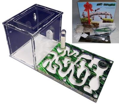 Formikarium комплект с подарками разведение муравьев