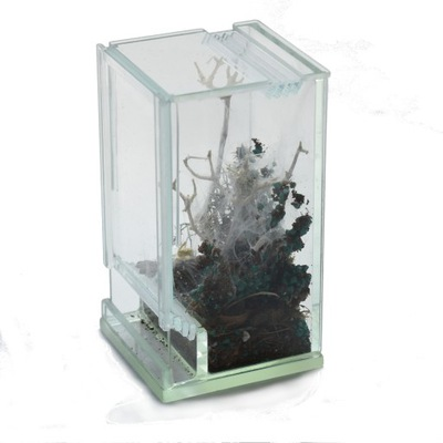 небольшой террариум 5x5x10cm стекло паук богомол