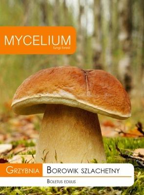 Мицелий белый гриб, белый ГРИБ