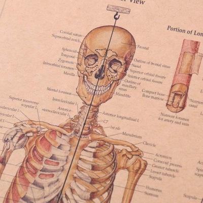 Anatomia Człowieka Szkielet Plakat 7372443129