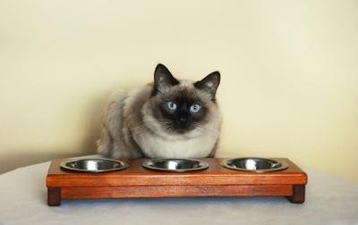 Стенд на миску для собаки или кота с дерева