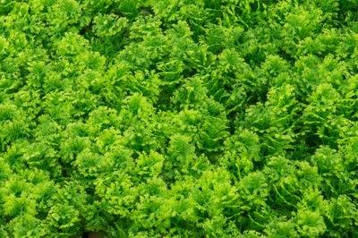 Rastlina widliczka umelé zabezpečenie rohože dekorácie