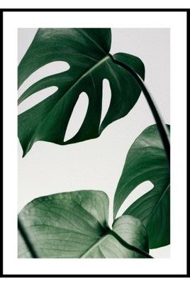 40x50 Plakat Botaniczny Agawa Rośliny Zoom