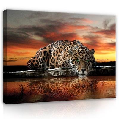 Obraz do sypialni JAGUAR tygrys zwierzęta 100x70