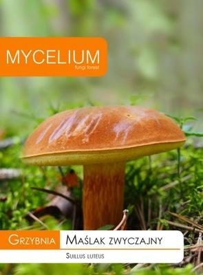 Мицелий маслюк ОБЫЧНЫЙ Грибы лесные в саду