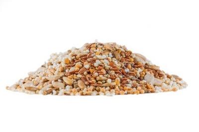 корм семена муравьи - Messor barbarus