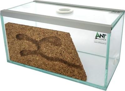 Lasius niger + Formikarium на муравьев, все комплект .