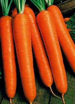 Морковь поздняя коралл большой пакет 5g