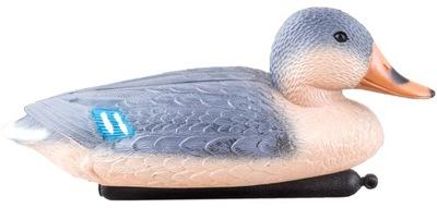 Плавающие утка кроссворд Самка для водоемы ВОДНОГО
