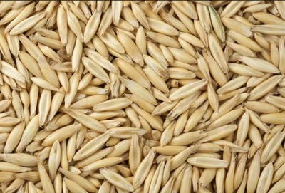 ОВЕС Зерно семена POPLON