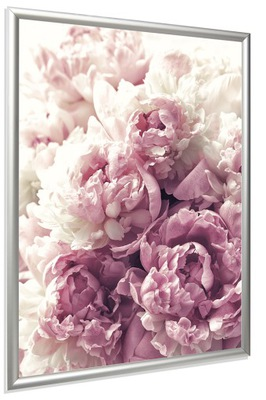 ПЛАКАТ В СЕРЕБРЯНОЙ ПЛЕЧО ФОТО 30x40 цветы Пионы