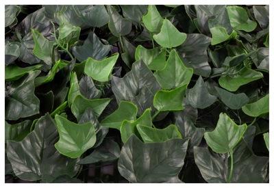 Ivy hedera zelený panel plot umelé
