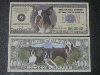 One Million ??? Собака Порода Бостон Терьер Терьер