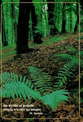 Открытка открытка природа