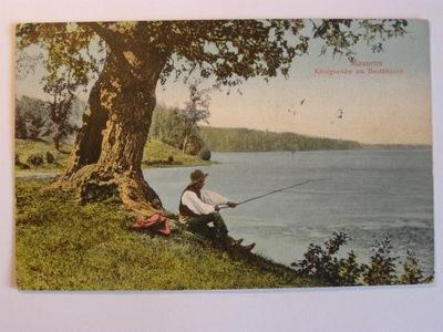 Jezioro Bełdany Mazury Ruciane Dąb królewski 1911