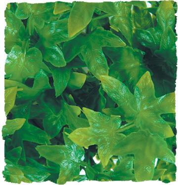 ZOO MED Roślina dekoracyjna Congo Ivy Large