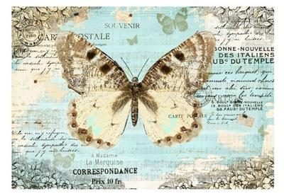 Foto Tapety motýľ motýľ, zvieratá, titulky 350x245