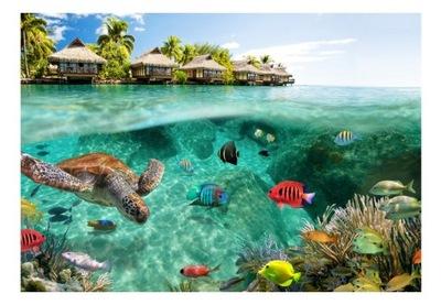 Foto Tapety krajiny, ryby, more, vody 300x210