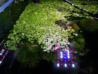 Ресница насос растение плавающая ЧАСТЬ XL
