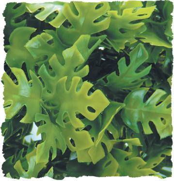 ZOO MED Roślina dekoracyjna Amazonian Phyllo Large