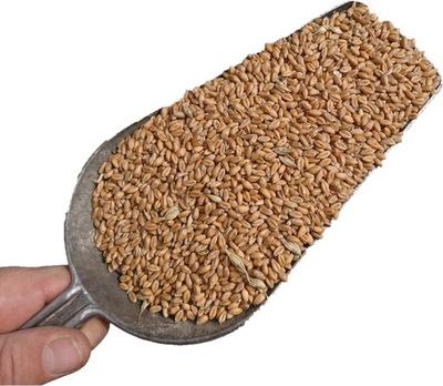 Пшеница польский  толстые зерно, мешок 20кг