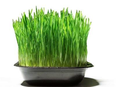 ??? Трава для кота готова ??? УКАЗАТЬ доставка 24 ЧАСА!