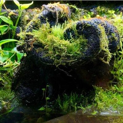 Hydrolon M żywa ścianka tło Terrarium Paludarium