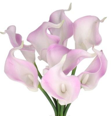 Kwiaty Sztuczne Kalia Bukiet 18 Kwiatow Promocja 1402245276 Oficjalne Archiwum Allegro