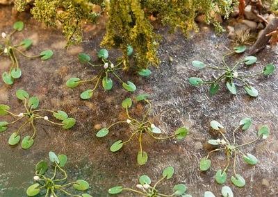 Lilie wodne ca. 5 mm, 12 szt., H0, Faller 181260