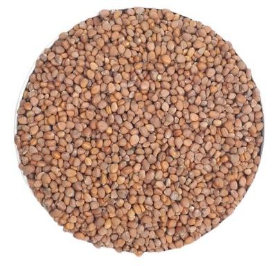 RZODKIEWKA nasiona na Kiełki 500g