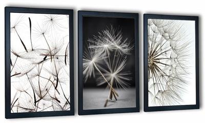 3 plakaty obrazy na ścianę dmuchawce 40x90
