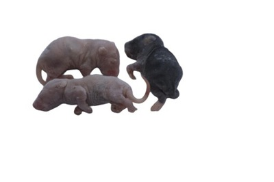 Крысы замороженные Фрикадельки 10 /15 г + сухой лед