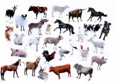 Магниты на холодильник я узнаю животные ФЕРМА
