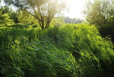 Фото Природа B .Осинский  современная Арт