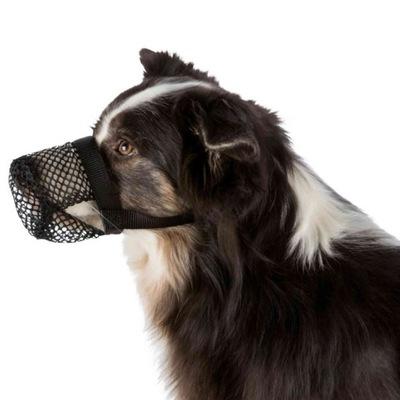 Намордник защищает от trutkami для собаки Трикси