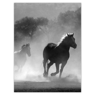 Plakat 30x40 Galopujące konie