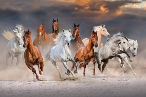 Fototapeta 3d Koń Konie Zwierzęta 150 Wzorów 8690335369 Allegro Pl