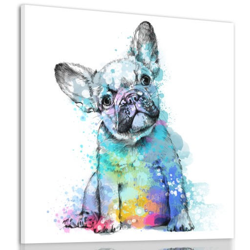 Obraz Na Plotnie Pies Buldog Francuski 80x80cm 8903472072 Allegro Pl