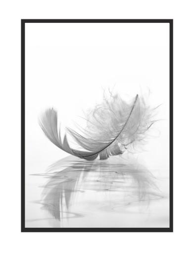 Obraz Plakat W Ramie 33x43 Cm Piórko P520