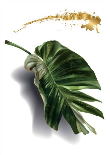 Monstera Plakat Plakaty do ramki B2 70x50cm