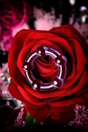 róża z penisa